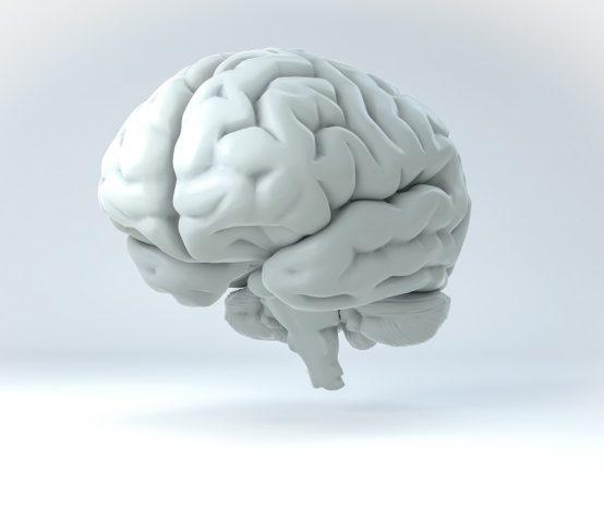 Parkinson's Begins In The Gut